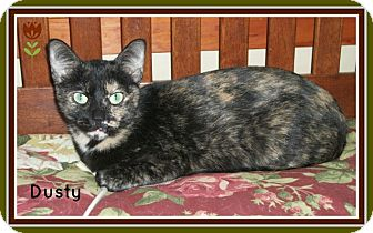 Calico Cat for adoption in New Richmond,, Wisconsin - Dusty