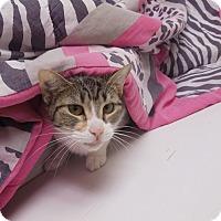 Adopt A Pet :: Mary Ann - Medina, OH