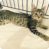 Adopt A Pet :: Gail - Speonk, NY