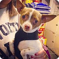 Adopt A Pet :: Little Girl - Manhattan, NY