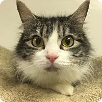 Adopt A Pet :: MINAJ - Owenboro, KY