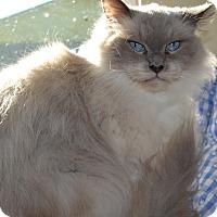 Adopt A Pet :: Barney - Kelso/Longview, WA