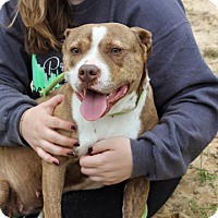 Adopt A Pet :: Dolly - Macon, GA