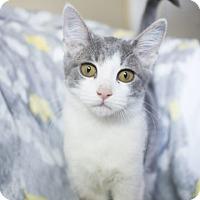 Adopt A Pet :: Lark - Savannah, GA