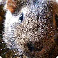 Adopt A Pet :: Beth - Ogden, UT