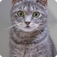 Adopt A Pet :: Lips - Merrifield, VA