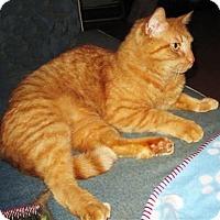 Adopt A Pet :: Opie - N. Billerica, MA