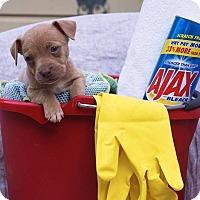 Adopt A Pet :: Ajax - Greensboro, NC