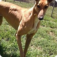 Adopt A Pet :: Fay - Randleman, NC