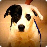 Adopt A Pet :: Esme~meet me~ - Glastonbury, CT