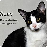 Adopt A Pet :: Suey - Ortonville, MI