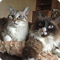 Adopt A Pet :: Cinnamon & Bandit - Palatine, IL