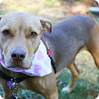 Adopt A Pet :: Miss Miley (courtesy listing for Seattle Humane Society) - McKenna, WA