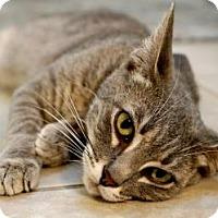 Adopt A Pet :: Charbonnet - New Orleans, LA