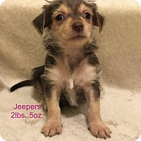 Adopt A Pet :: Jeepers - Concord, CA