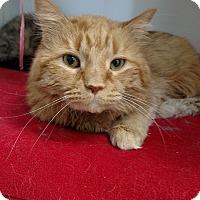 Adopt A Pet :: Mango - Chaska, MN