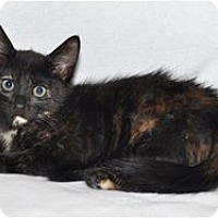 Adopt A Pet :: Janet - Lincoln, CA