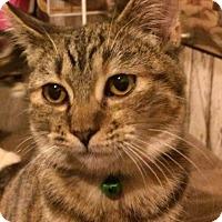 Adopt A Pet :: Doll - Eureka, CA
