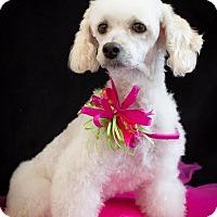 Adopt A Pet :: Pixie - Phelan, CA