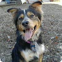 Adopt A Pet :: Curbo  (ETAA) - Spring Valley, NY