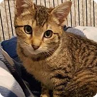 Adopt A Pet :: Zelda - Freeport, NY