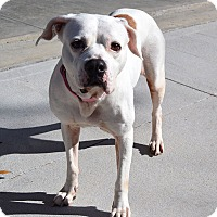 Adopt A Pet :: Emma - Lake Pansoffkee, FL
