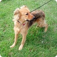 Adopt A Pet :: *Shaymus - PENDING - Westport, CT
