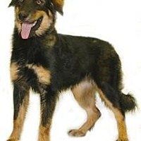 Adopt A Pet :: Daphne - Inverness, FL
