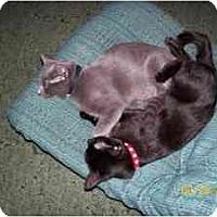 Adopt A Pet :: Blackbird - Davis, CA