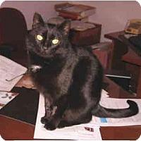Adopt A Pet :: Katydew - Colmar, PA