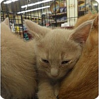 Adopt A Pet :: Gordon - Warren, MI