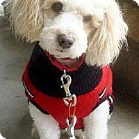 Adopt A Pet :: Fifi - Long Beach, CA