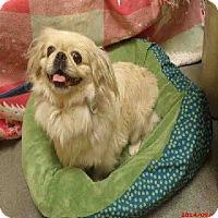 Adopt A Pet :: Zena - Chantilly, VA