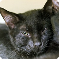 Adopt A Pet :: Willfred B*Ramble - Chicago, IL