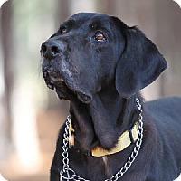 Adopt A Pet :: Georgie - Minneola, FL