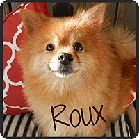 Adopt A Pet :: Roux - Orange, CA
