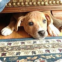 Adopt A Pet :: Lola - West Bend, WI