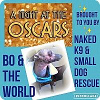 Adopt A Pet :: Bo in Michigan - Lansing, MI