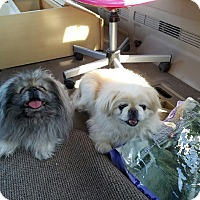 Adopt A Pet :: Tinkerbell bonded with Boo - Las Vegas, NV