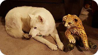 Husky Mix Dog for adoption in Raytown, Missouri - Nakita