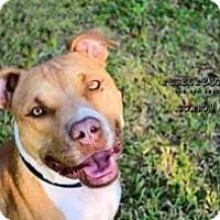 Adopt A Pet :: Cowboy - Victoria, TX