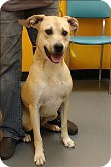 Labrador Retriever Mix Dog for adoption in Dallas, Georgia - 16-10-2903 River
