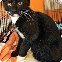 Adopt A Pet :: Barley - Middletown, NY