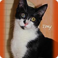Adopt A Pet :: Tony - Waterbury, CT