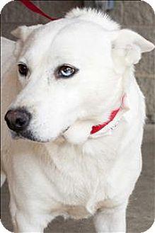 Shepherd (Unknown Type) Mix Dog for adoption in Birmingham, Alabama - Gypsy