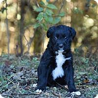 Adopt A Pet :: Lambert - Groton, MA