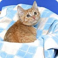 Adopt A Pet :: CHUCKY - Gloucester, VA