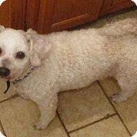 Adopt A Pet :: Jack - Alexandria, KY