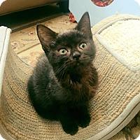 Adopt A Pet :: Wanda - Chicago, IL