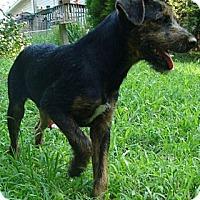 Adopt A Pet :: MC - Brattleboro, VT